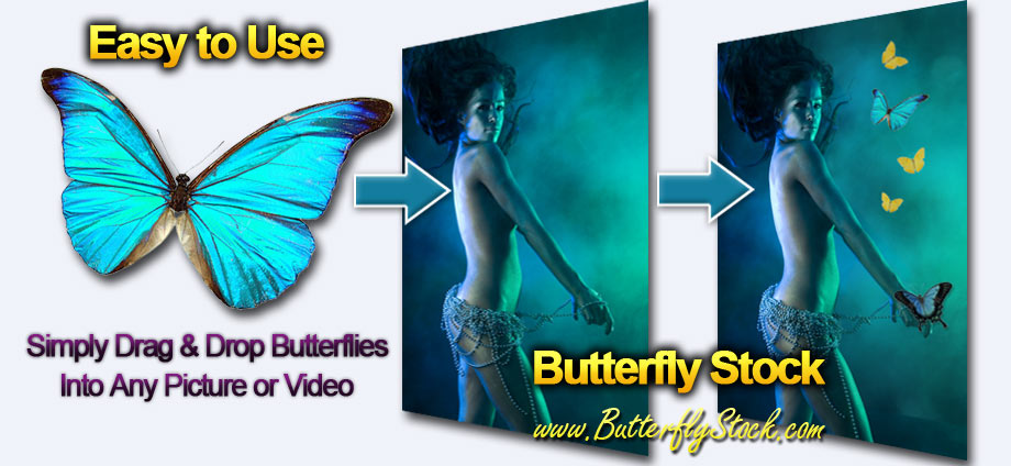 Butterfly Stock Photo Pictures